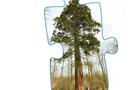 Arbor&Sens, à la découverte des relations entre l'homme et le bois