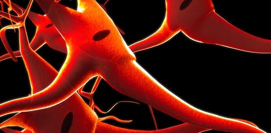 Réussir grâce aux neurosciences !